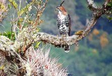 Tour observación de aves