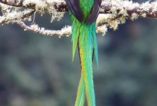 Observación de Quetzales